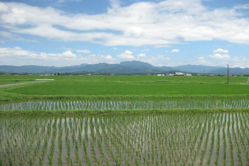 熊本の田園写真