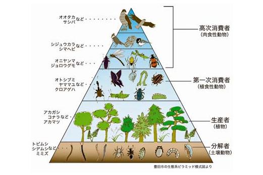 生態系ピラミッドの写真
