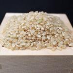 自然栽培米と無農薬栽培米の違いとは!?