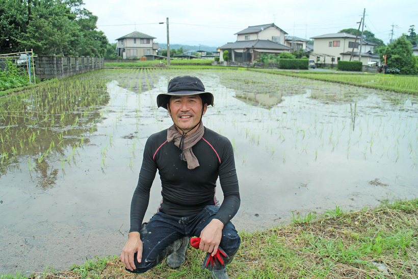 【動画】無農薬でお米は作れるのか?雑草や害虫の対策は?