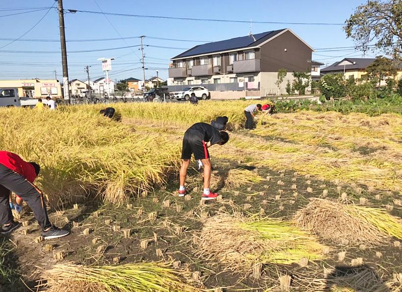 ブレスト自然栽培米収獲