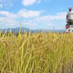 無農薬米作りが日本で難しい理由とは!?