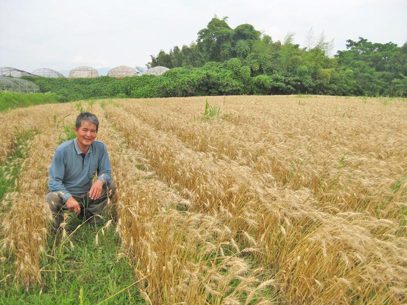 冨田さんと小麦