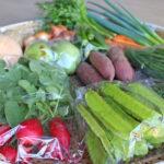 自然栽培農法で野菜つくり-40余年の継続で本来の味とパワー