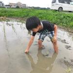 稲を手植えすることで得られる意外な効果とは?