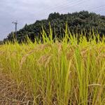 無農薬・無肥料での栽培は、土壌作りがとても重要である理由