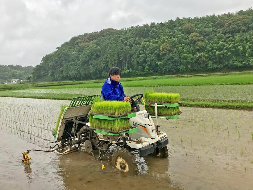 井手上自然栽培米田植え