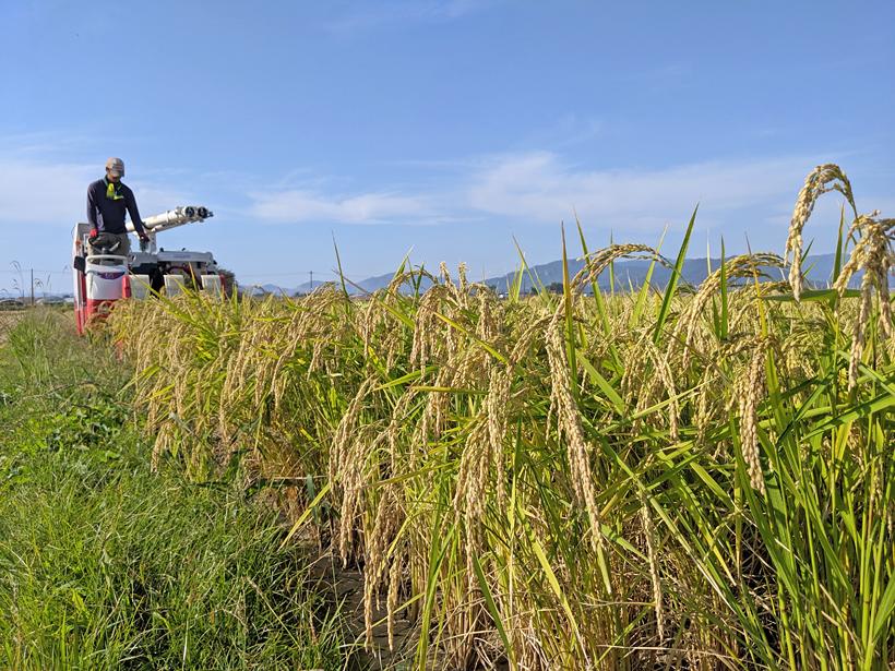 冨田自然栽培米収穫