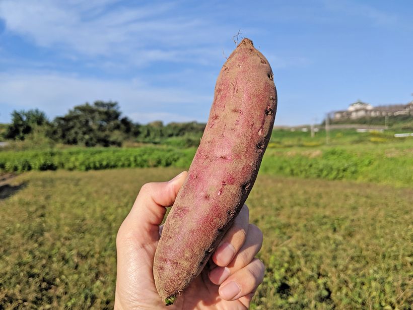 自然栽培さつまいもが美味しい理由とその楽しみ方