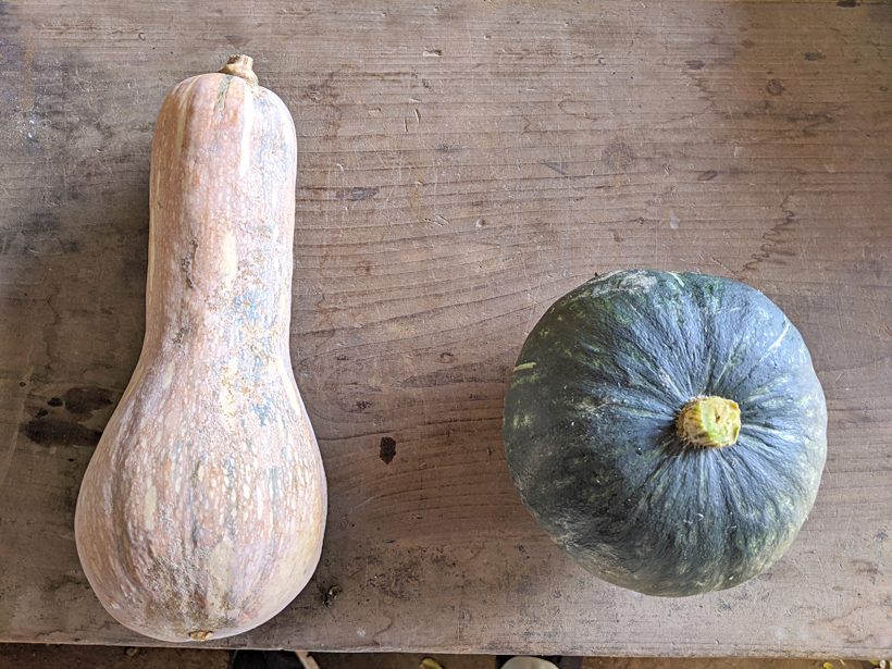 冨田自然栽培春日ぼうぶらとかぼちゃの比較