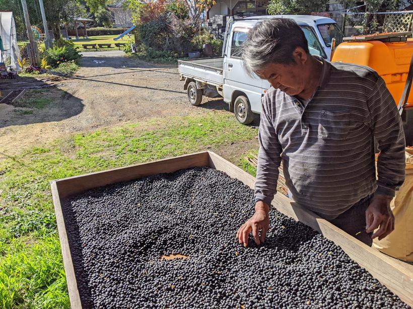 冨田自然栽培丹波の黒大豆天日干し