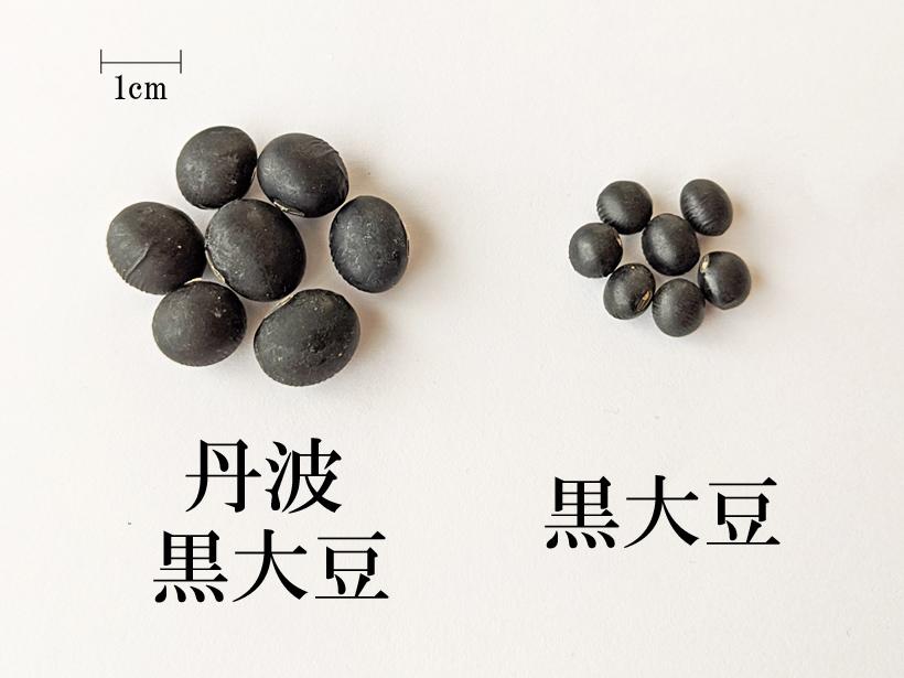 冨田自然栽培丹波の黒大豆の比較