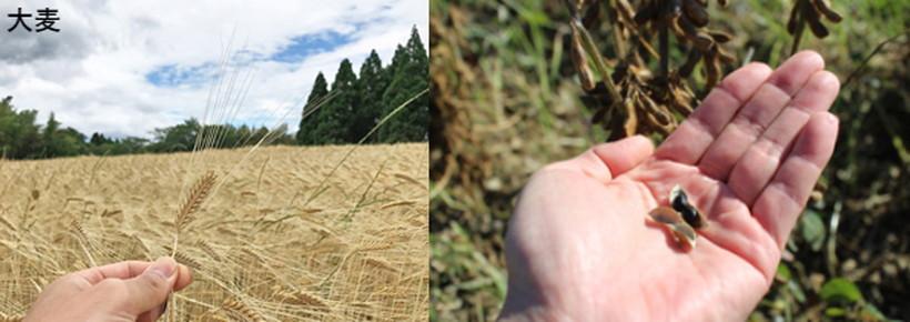 大麦と黒大豆