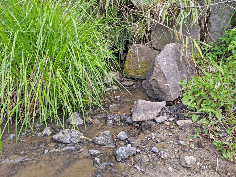 縄田米の湧き水