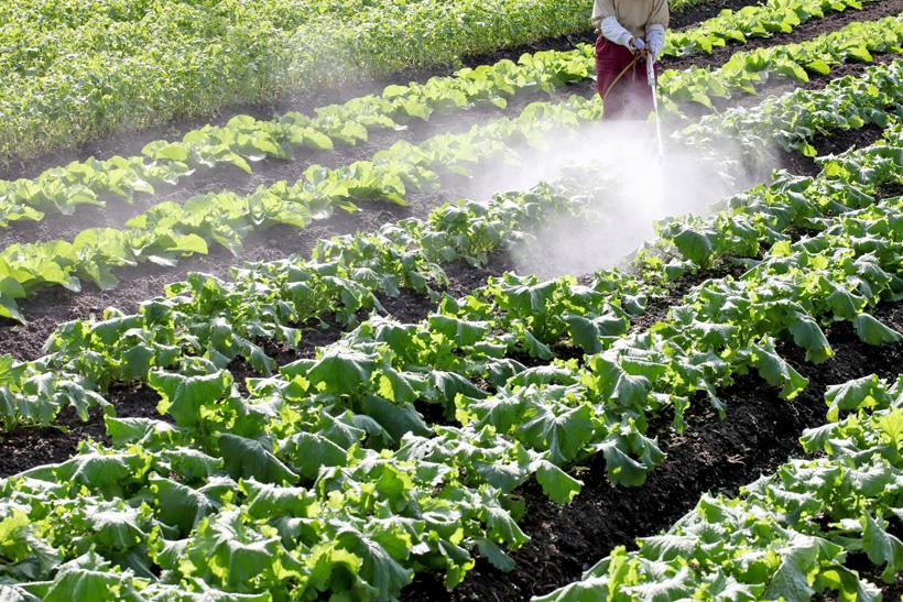 農薬大国日本ー無農薬栽培は全体の0.5%以下という現実