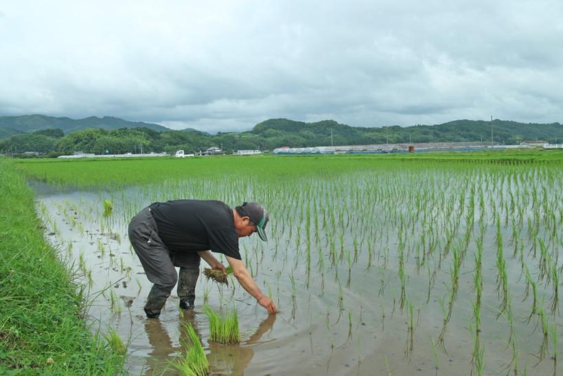 自然栽培米農家が自然栽培を志した理由とは?以前はどんなお仕事をしていた?