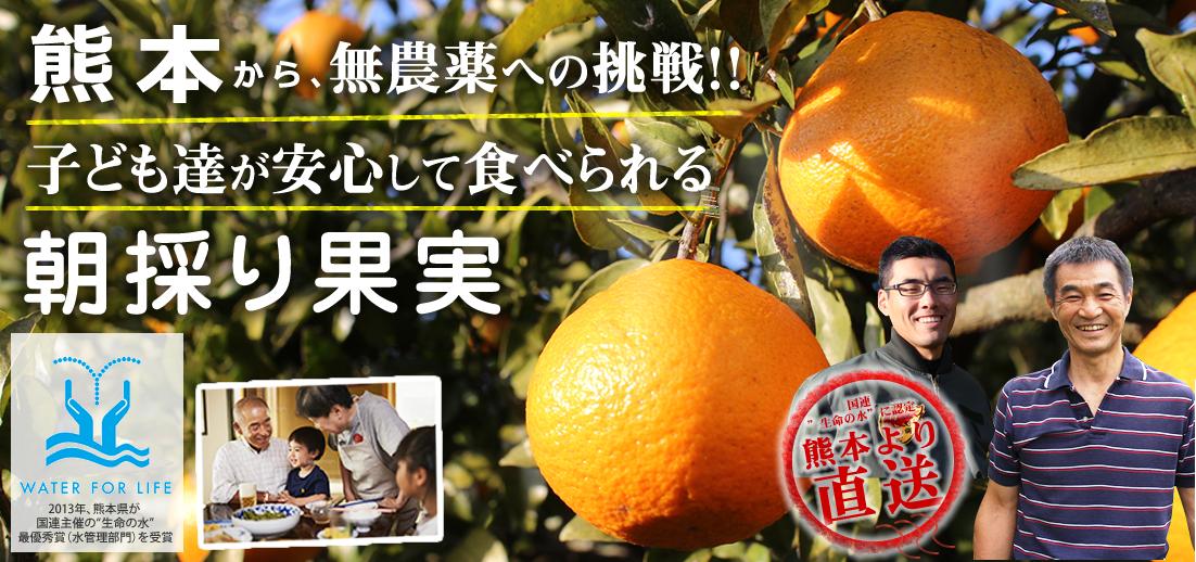 熊本果樹サイト