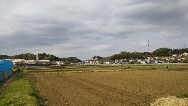 春先の田んぼ