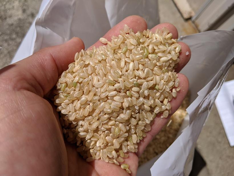 野田さん玄米
