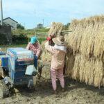 天日干しすると米はどうなる?山野自然栽培米の天日干し米に見るその大切さ