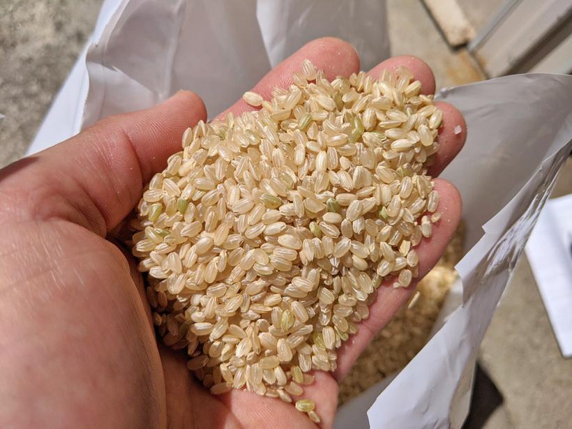 野田自然栽培米
