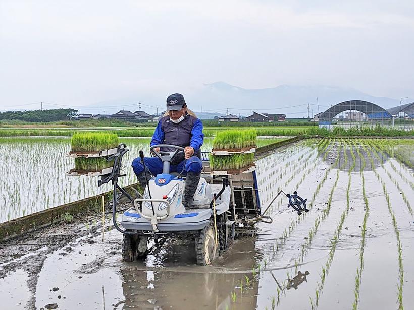 野田自然栽培米の田植え