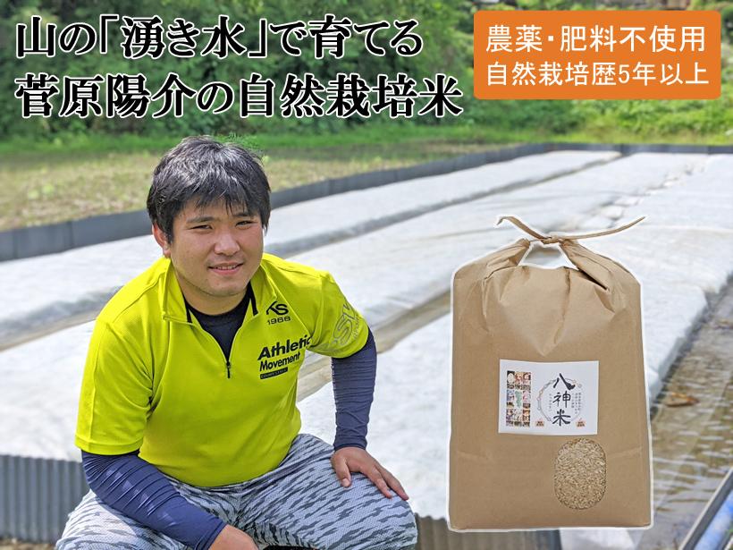 八神米-菅原自然栽培米