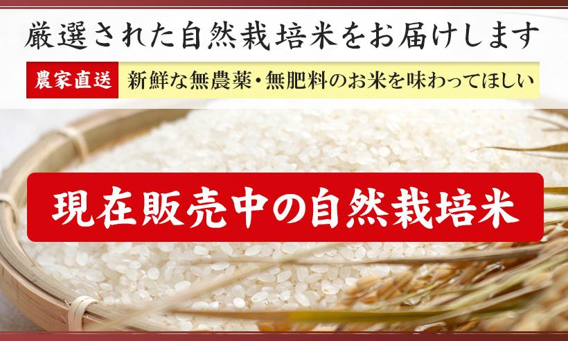 自然栽培米販売中