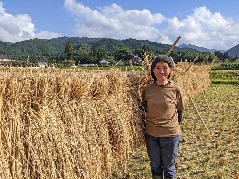 桑原天日干し米