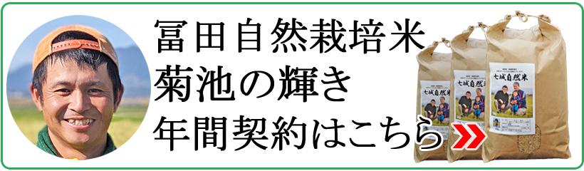 年間契約冨田和孝の自然栽培米菊池の輝き