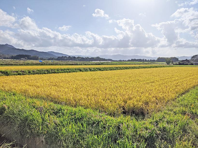 自然栽培米の田んぼ