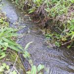 自然栽培米農家さんへ質問!田んぼに生活排水は混入しませんか?