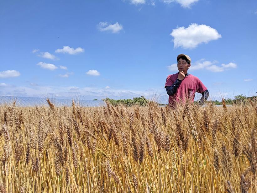 坂田真彦(真心農園)の無農薬・自然栽培小麦粉の種類と特徴とは?